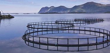 Aquaculture Pens