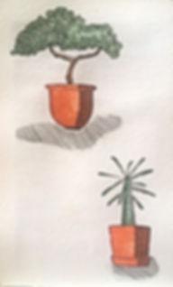 biljke.jpeg