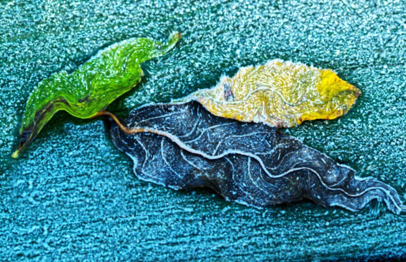 'Winter Warp' by Ian Clarke (9 marks)