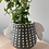 Thumbnail: spotted winged black planter