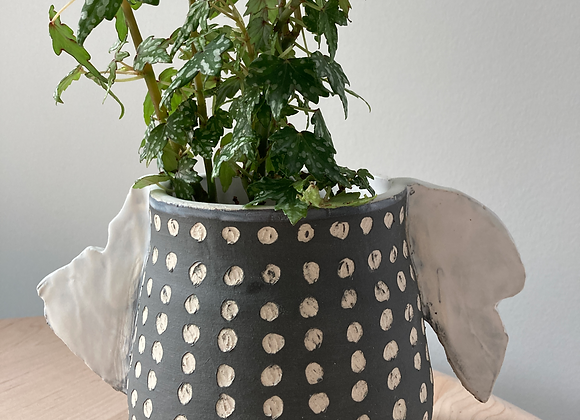 spotted winged black planter