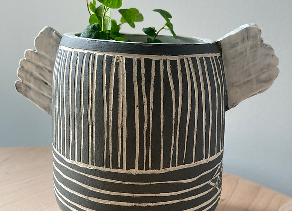 striped winged black planter