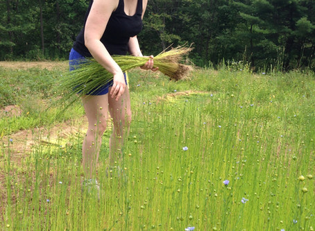 The first year of flax - 2017
