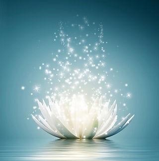 Lotus_bonne_résolution.jpg