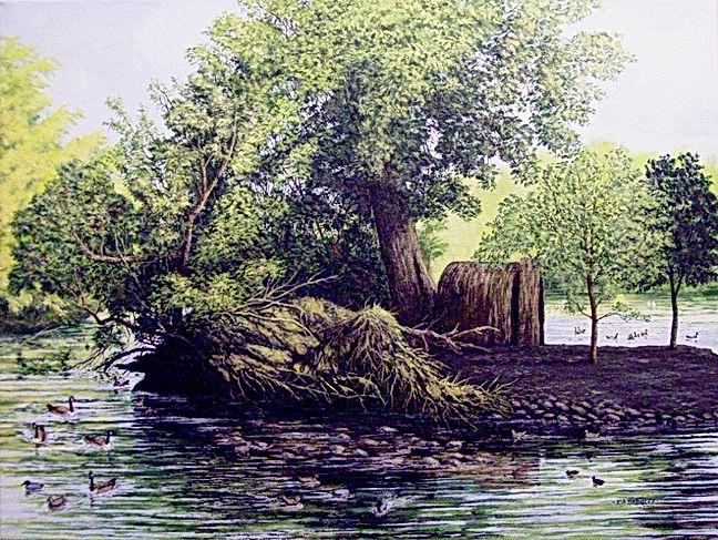 Fallen Tree,       Heath Pool,      Mary