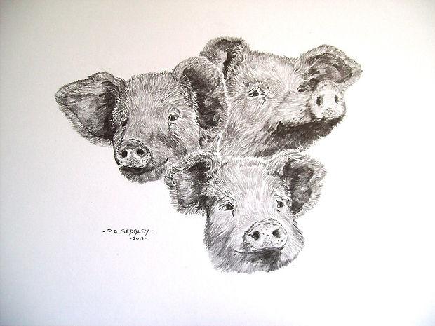 Happy Hogs    (pencil)     7 x 9ins.jpg