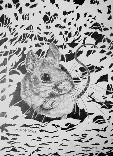 woodmouse   (pencil)   11 x 8ins.jpg