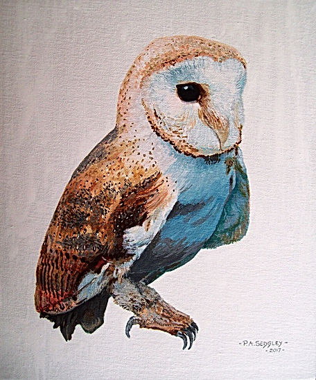 Barn Owl II   12 x 10ins   (acrylic ink)