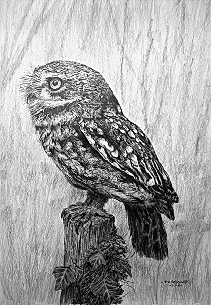Little Owl   13 x 9ins.jpg