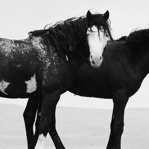 20x20 Wild Stallion and Colt