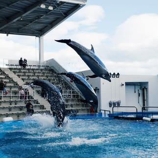 Sendai Aquarium.