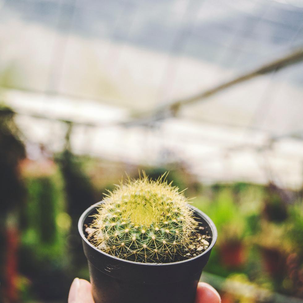 Cactus Valley.