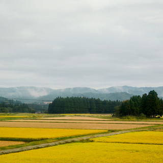 The view on mountains and rice fields.