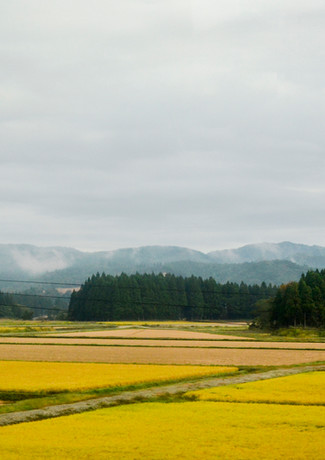 Countryside view on mountains and rice fields.