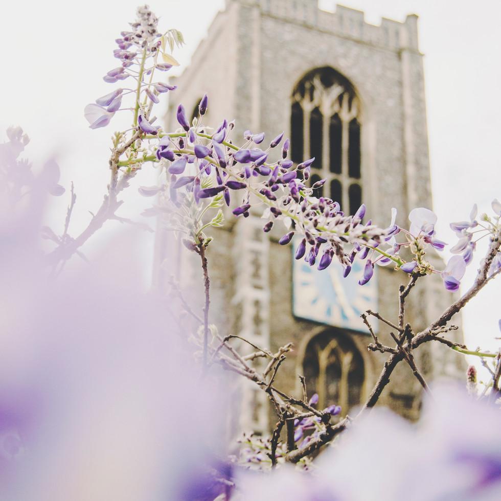 Wisteria blossom at St. Giles' Church.