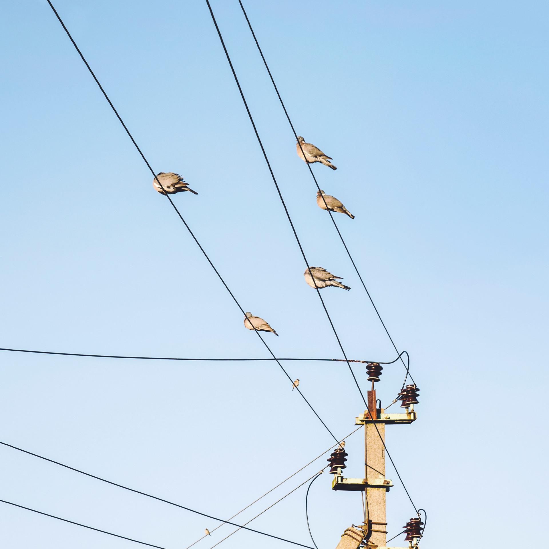 Birds in Guryevsk