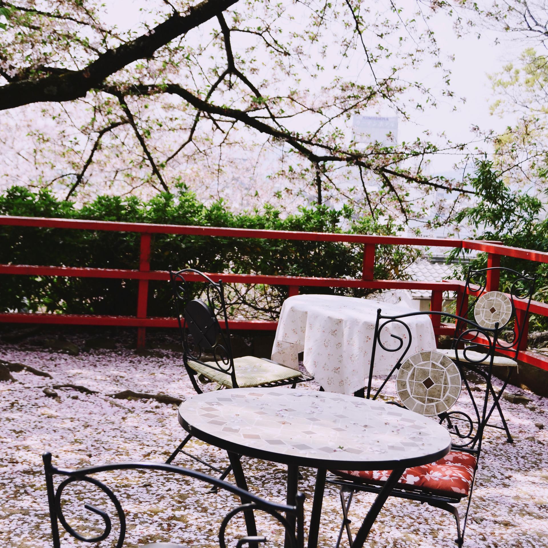 Cafe at Kimiidera.