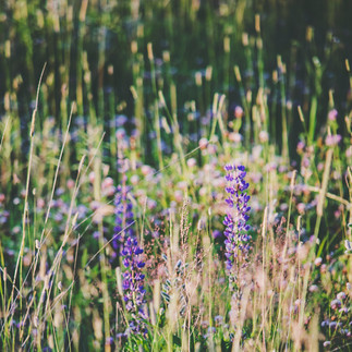 Flower field in Kaliningrad Oblast