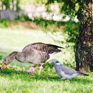 Birds at Wensum Park.