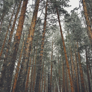 "Stolby National Park.  Национальный парк ""Красноярские Столбы""."