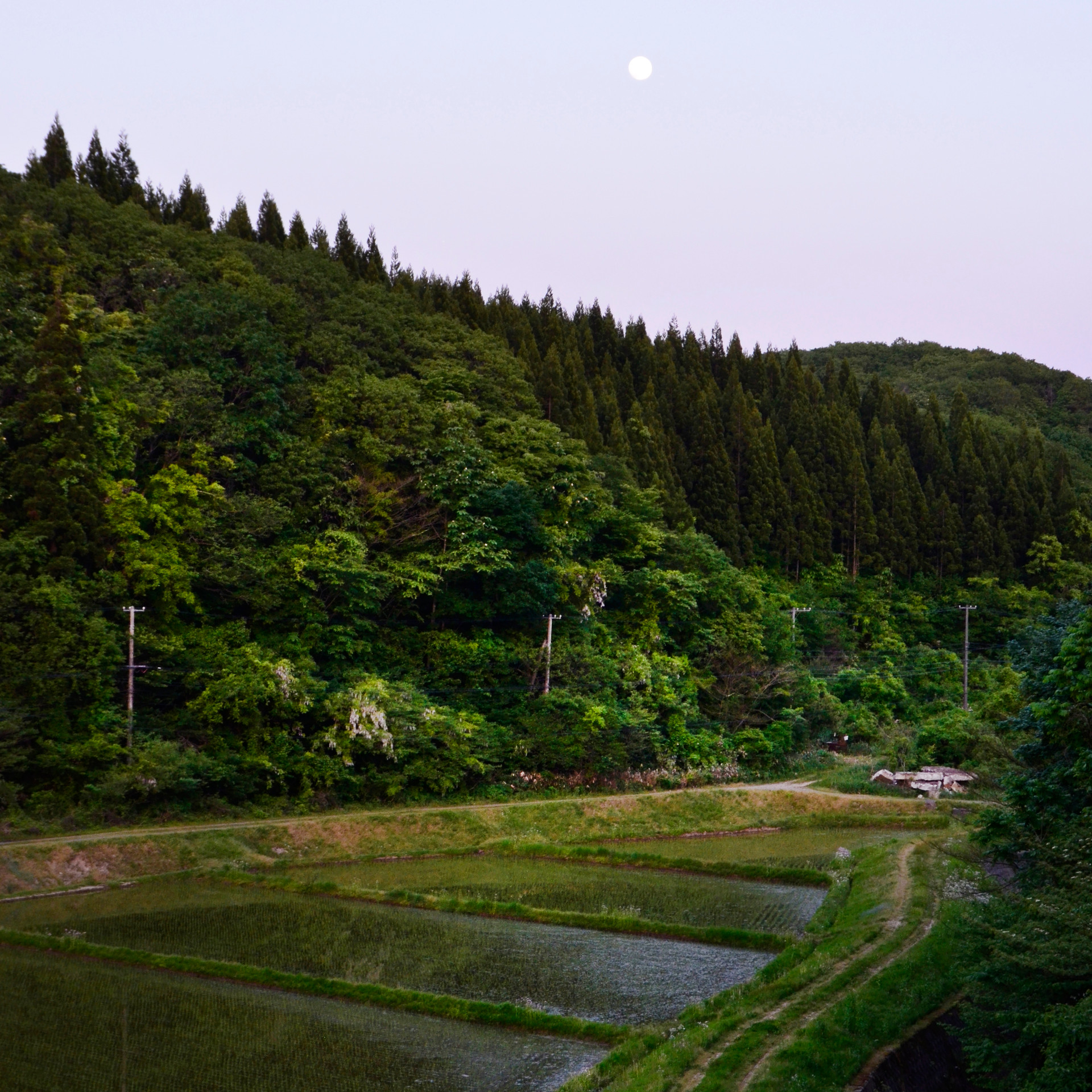 Rice fields and the Moon.