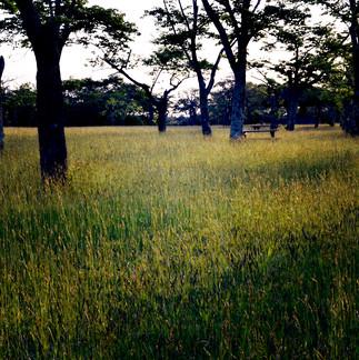 Hanaki Park.