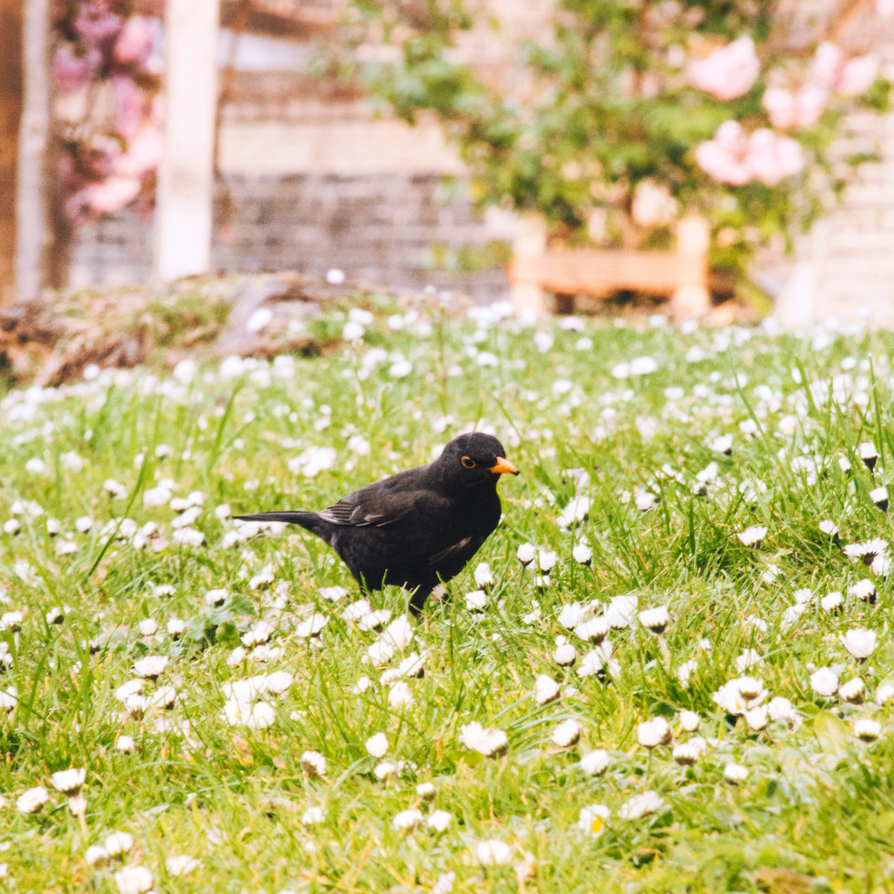 A bird in the Norwich City Centre.