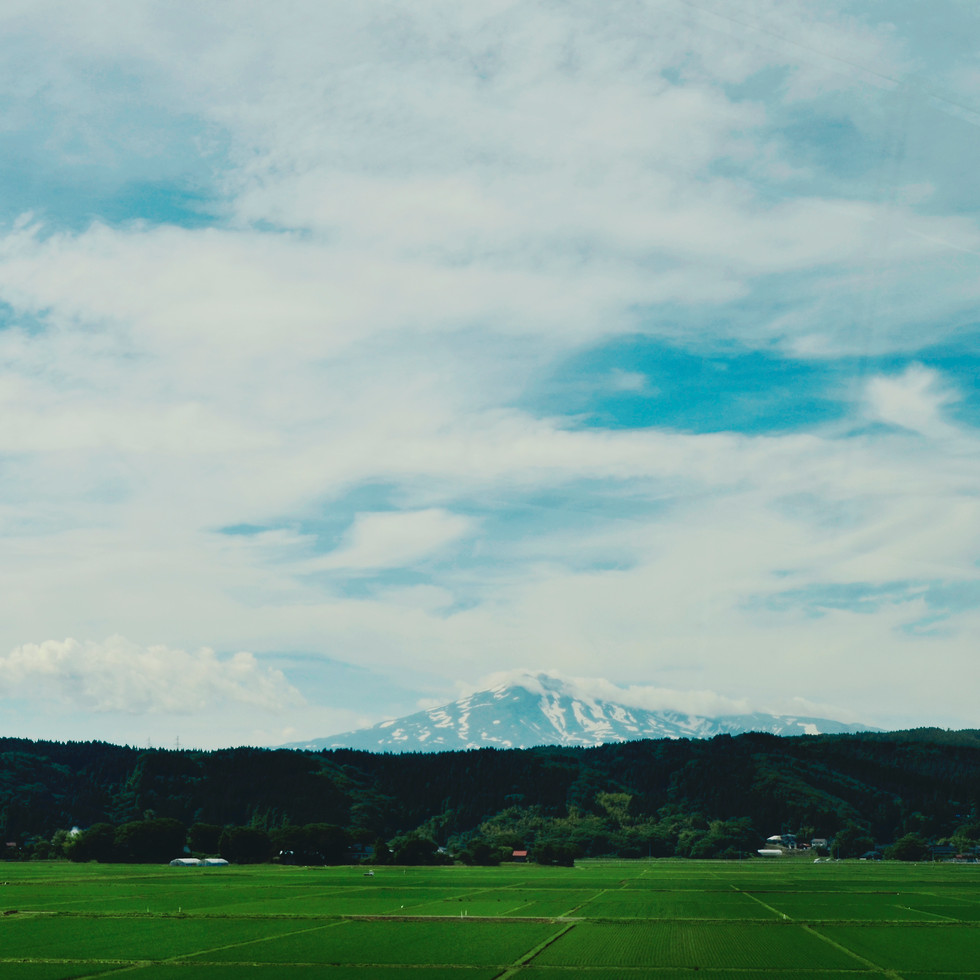 Mount Chokai and rice fields.