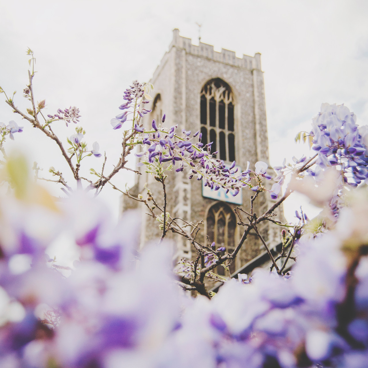 Wisteria blossom at St. Giles' Church.