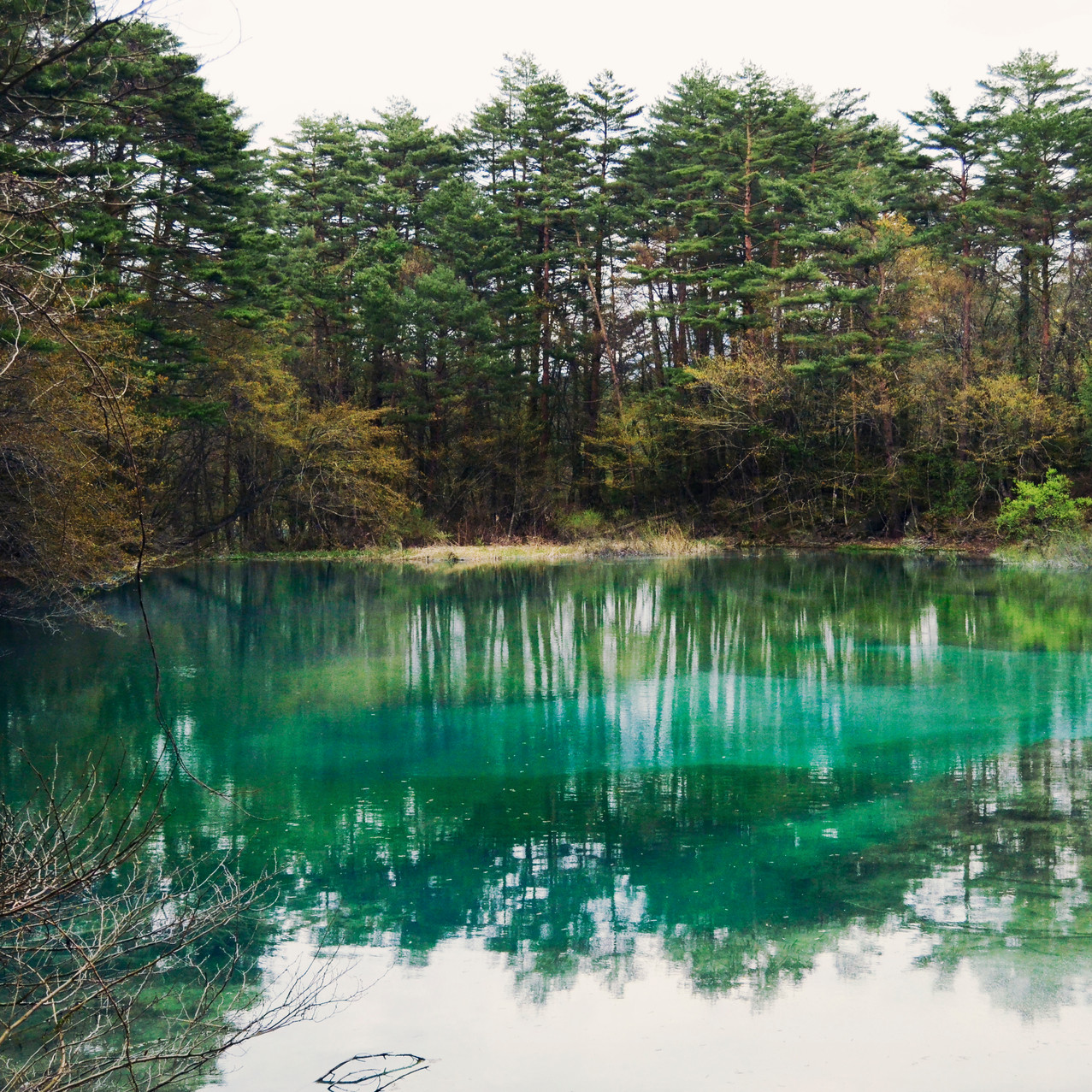 One of the ponds of Goshikinuma.