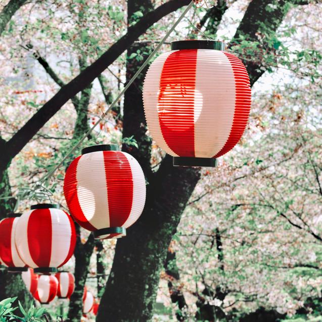 Cherry Blossom Festival.