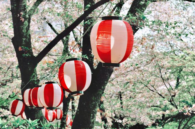 Sakura Festival, Wakayama Prefecture