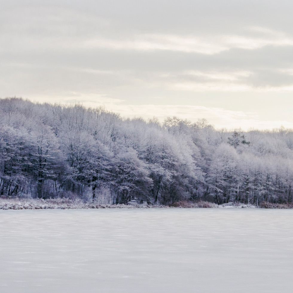 Frozen trees and lake in Guryevsk.