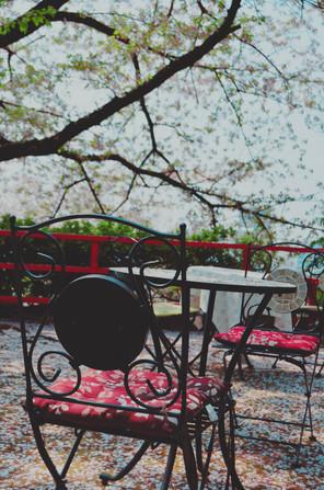 Cherry blossom, Wakayama Prefecture