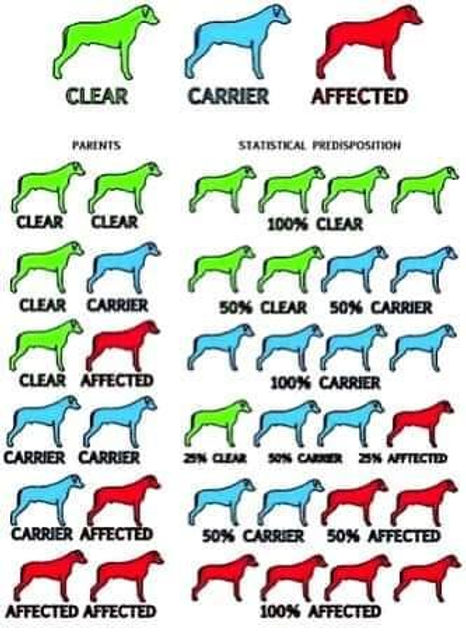Recessive.breeding.prediction.chart.jpg