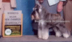 Schnauzer puppies for sale, Ohio Miniature Schnauzer breeder, Champion Schnauzer, Schnauzer Stud