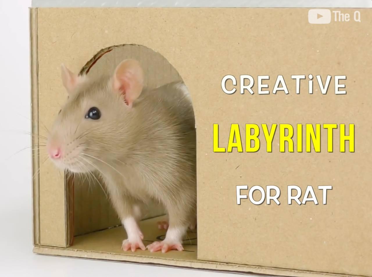 Built Labyrinth for Rat