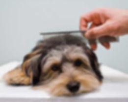 Full Pamper Dog Spa