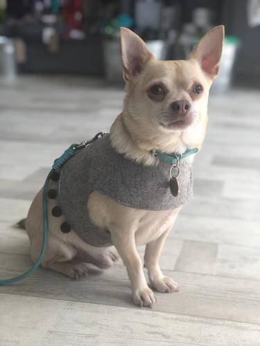 Dog Harness,