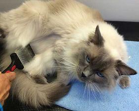 catcomfort.jpg