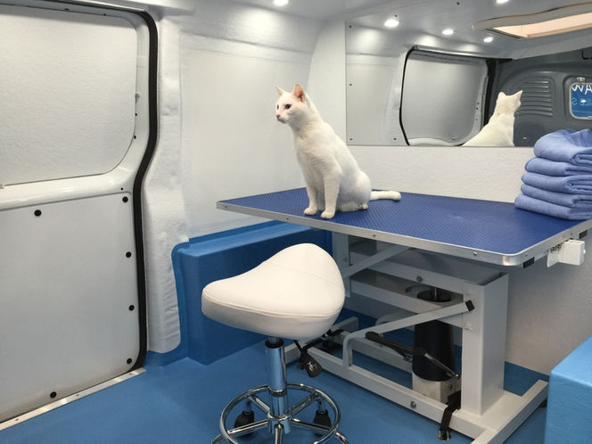4Paws Mobile Spa - Mobile Cat Groomers - White Cat, Grooming Van Interior