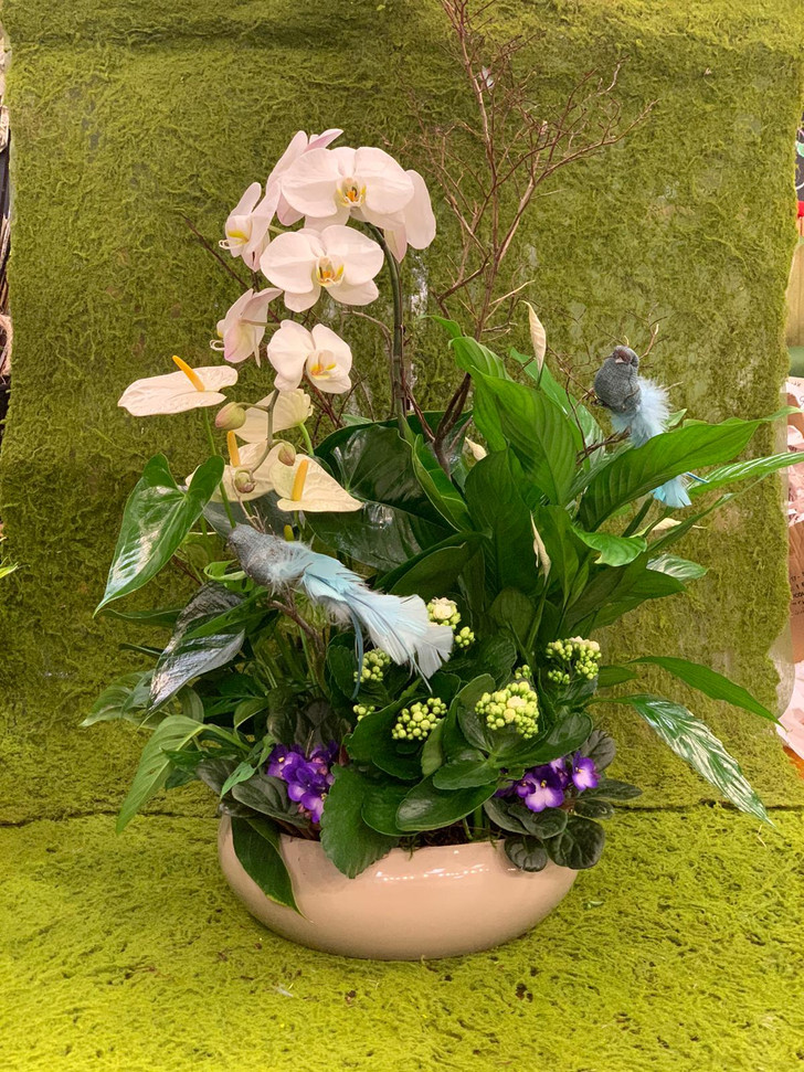 2020_christmas_winter_planter_orchid