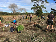 Tapora Reserve planting day 3 20-6-2019.