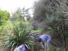 Waicare planting.png