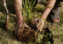 native-plant-reconnecting-northland-1024