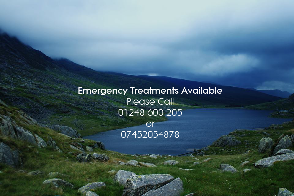 Emergency Dentist Bangor Bethesda