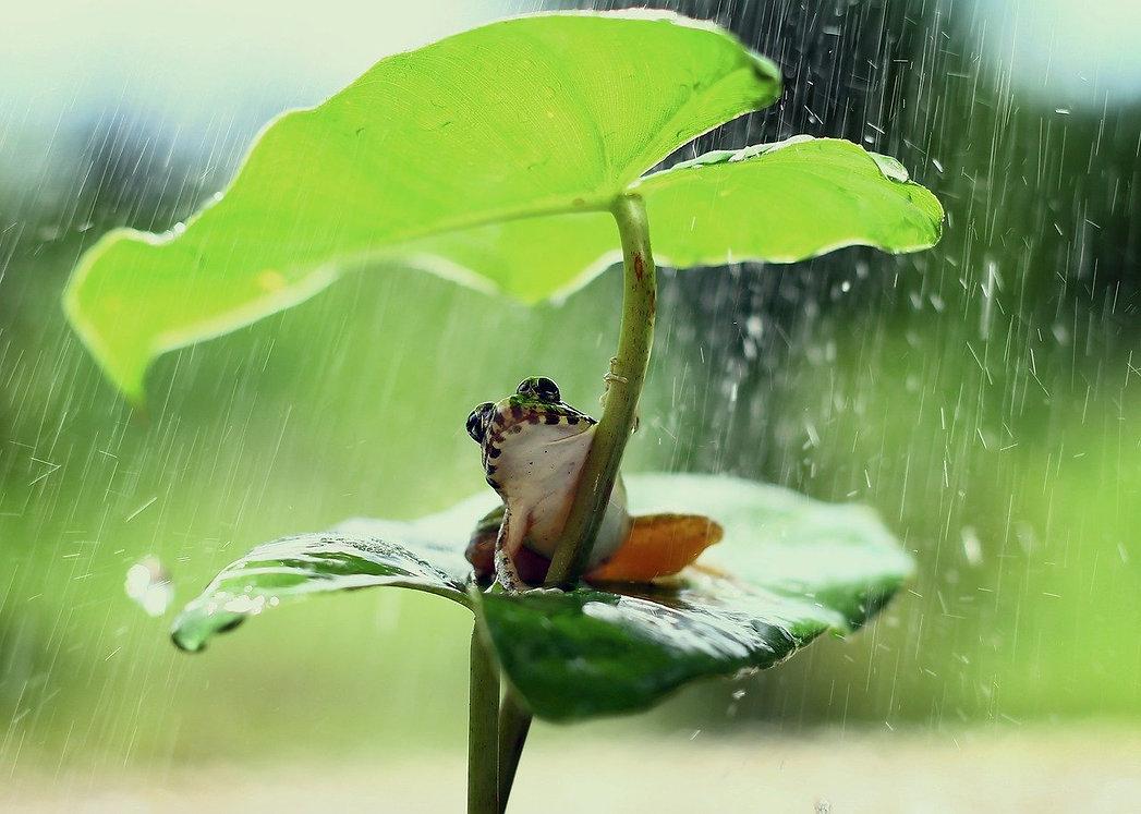 frog-5319326_1280.jpg
