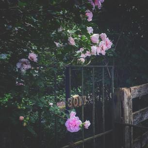 New Beginnings- Walnut Grove 9