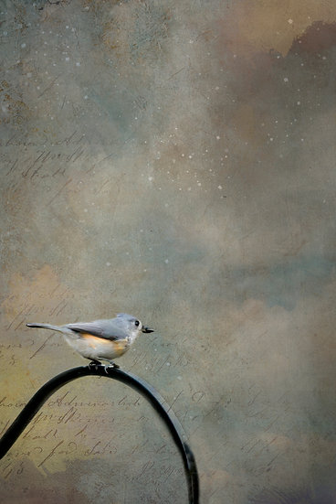"""Tufted Titmouse Matted Print (16"""" x 12"""")"""