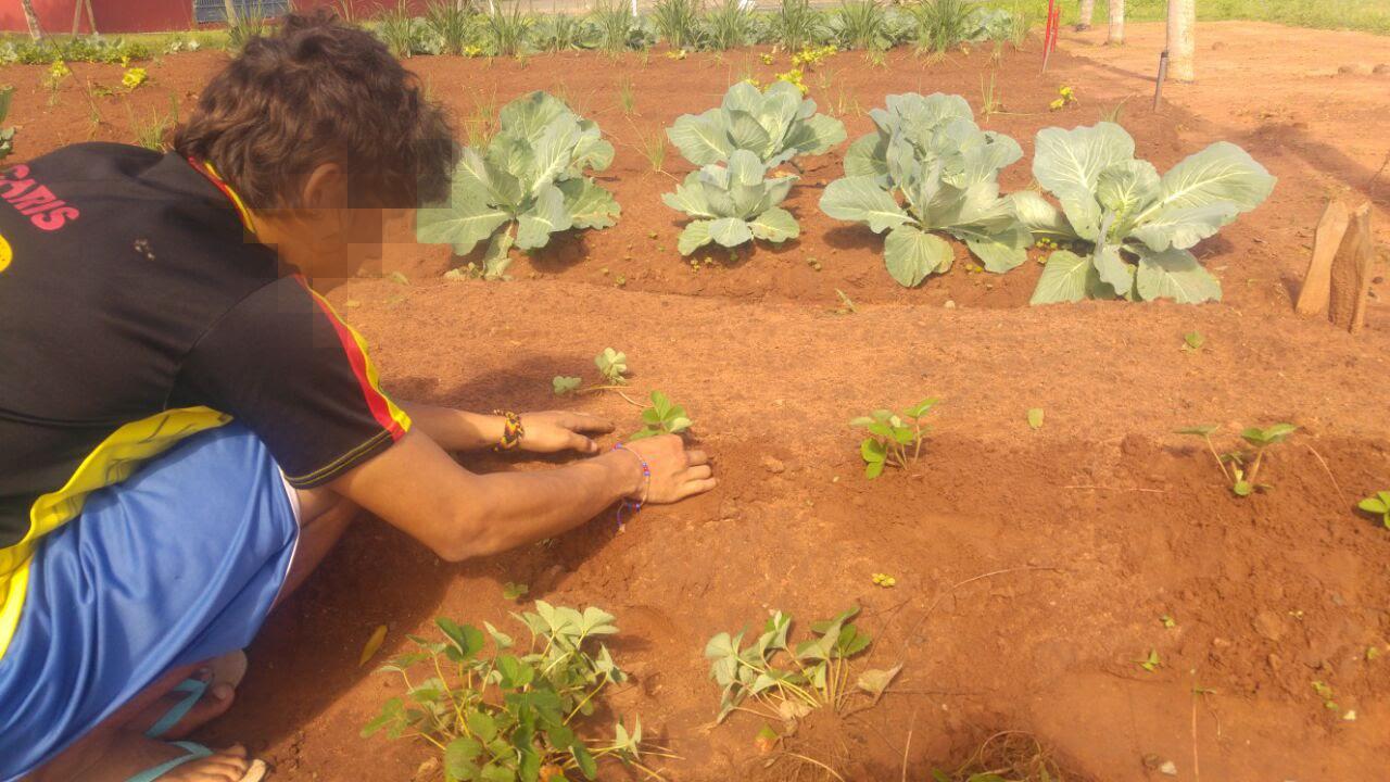 Horticultura CMT 2